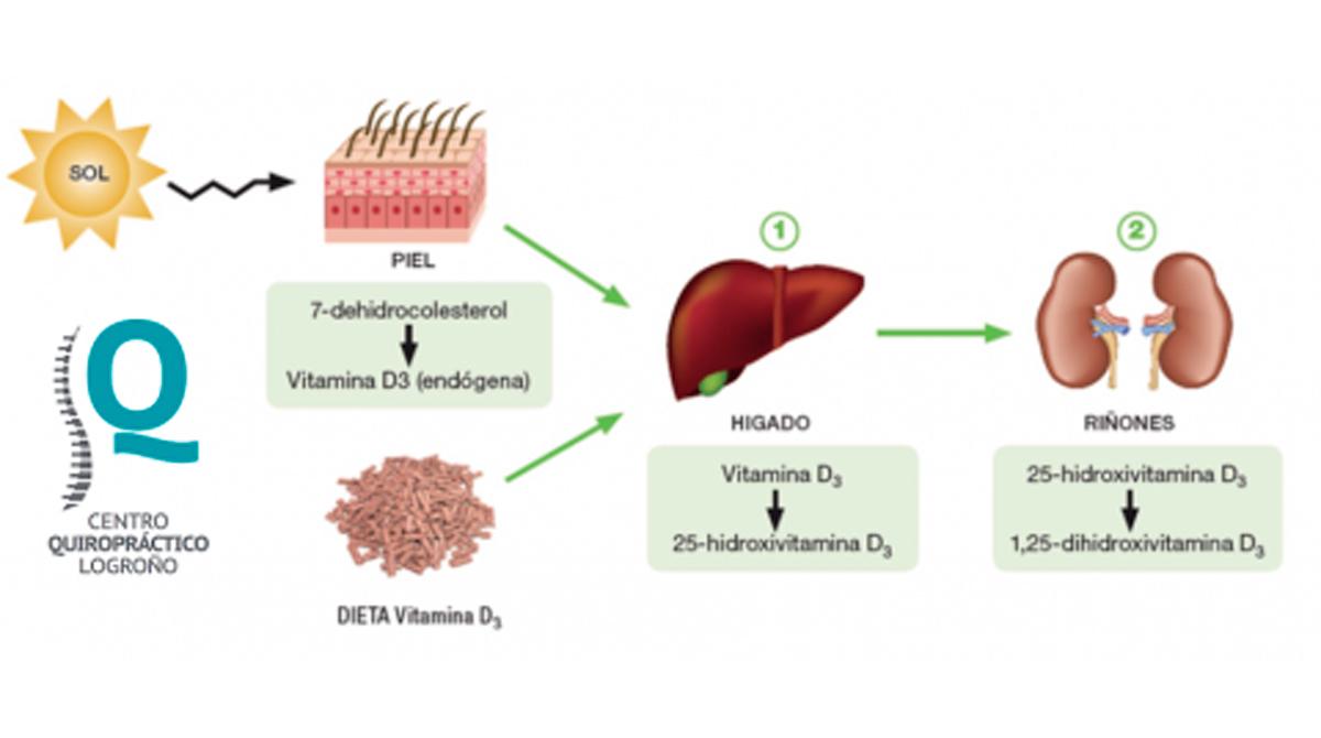 Infografía con los efectos de la Vitamina D en el cuerpo humano