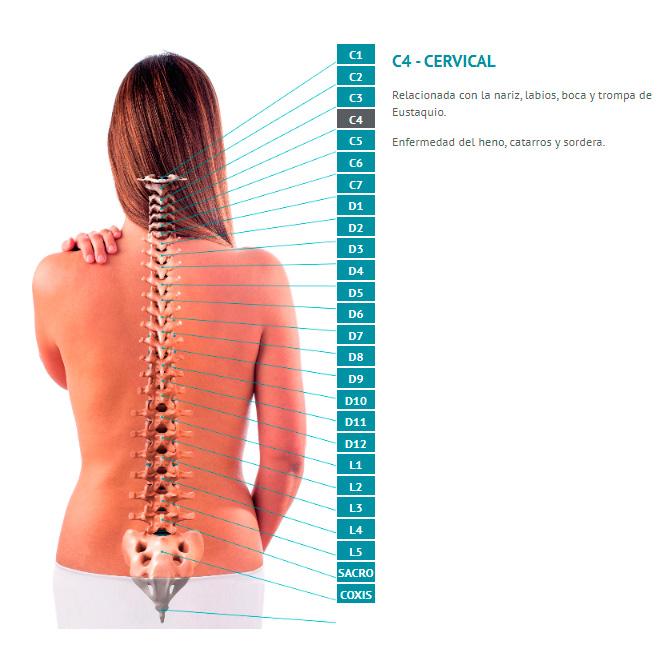 Guía de la columna vertebral. ¿Qué relación tiene cada vértebra con tu cuerpo?